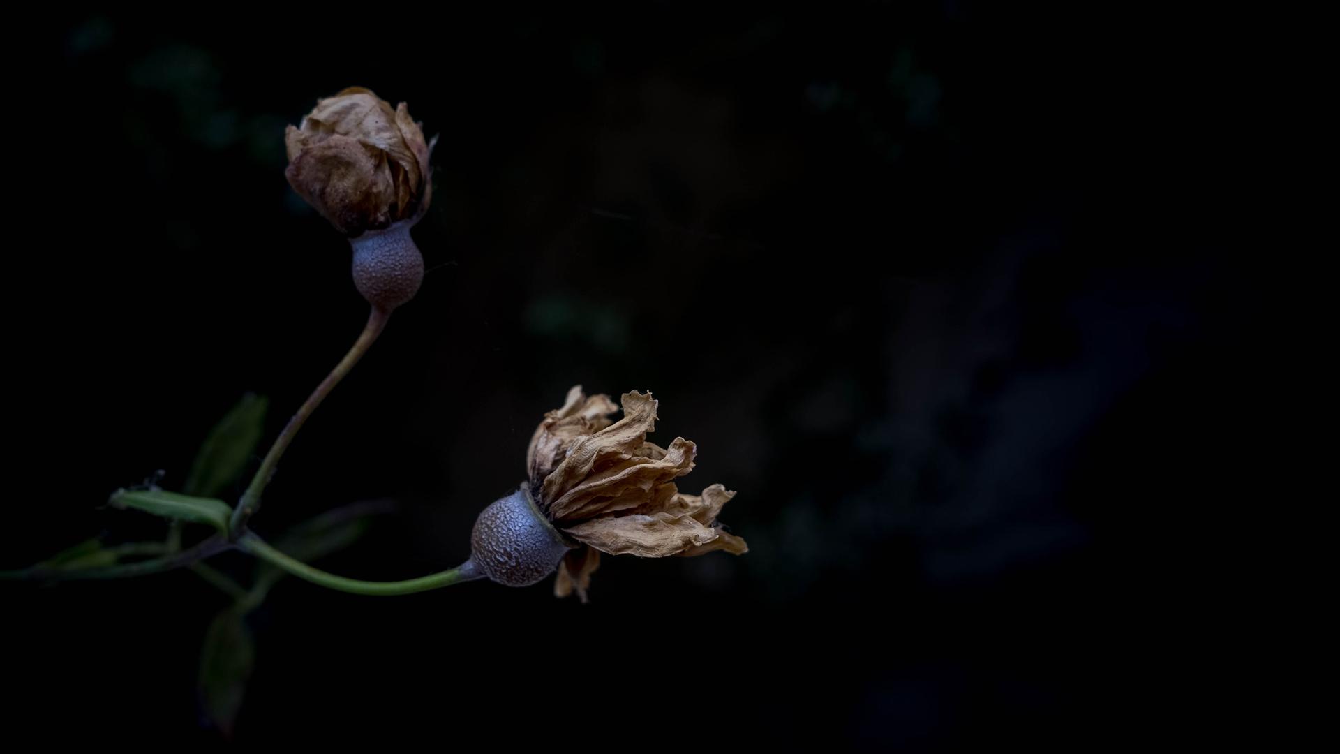 flores secas, de volta ao armário
