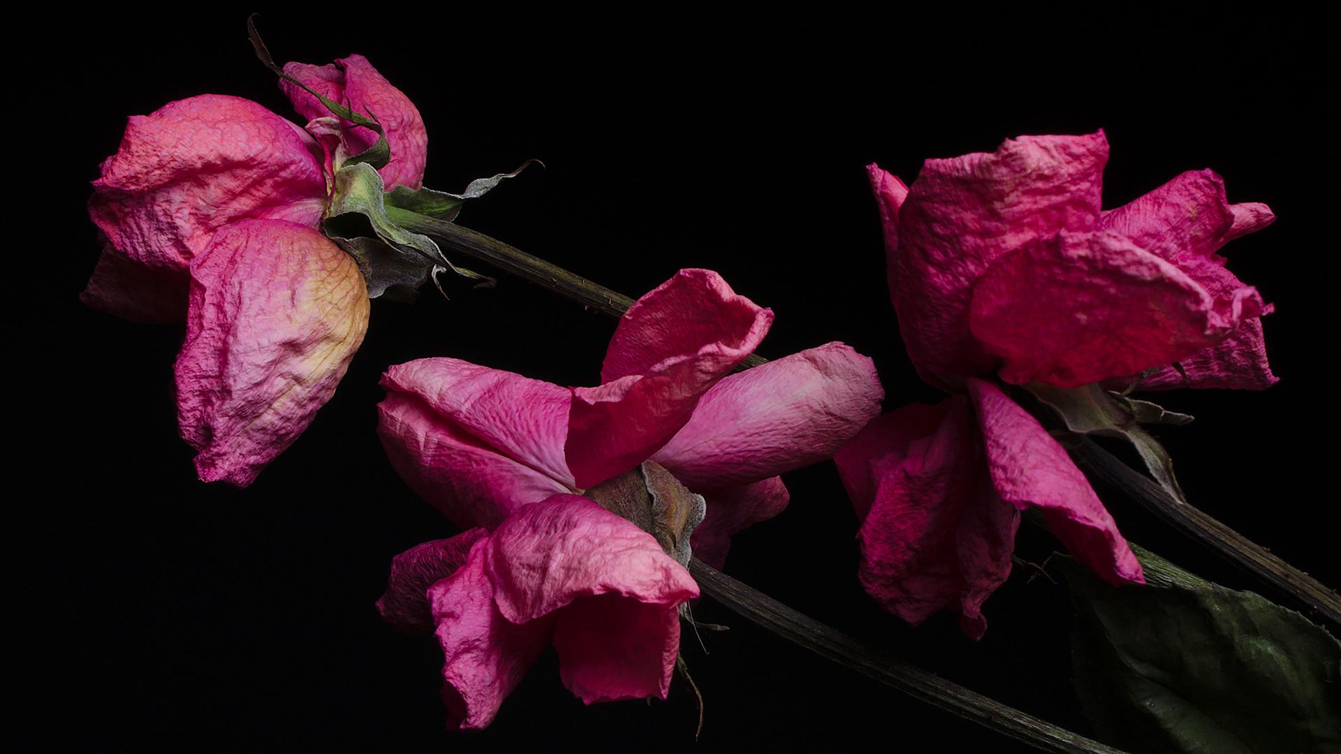 flores secas, lgbtq de volta ao armário