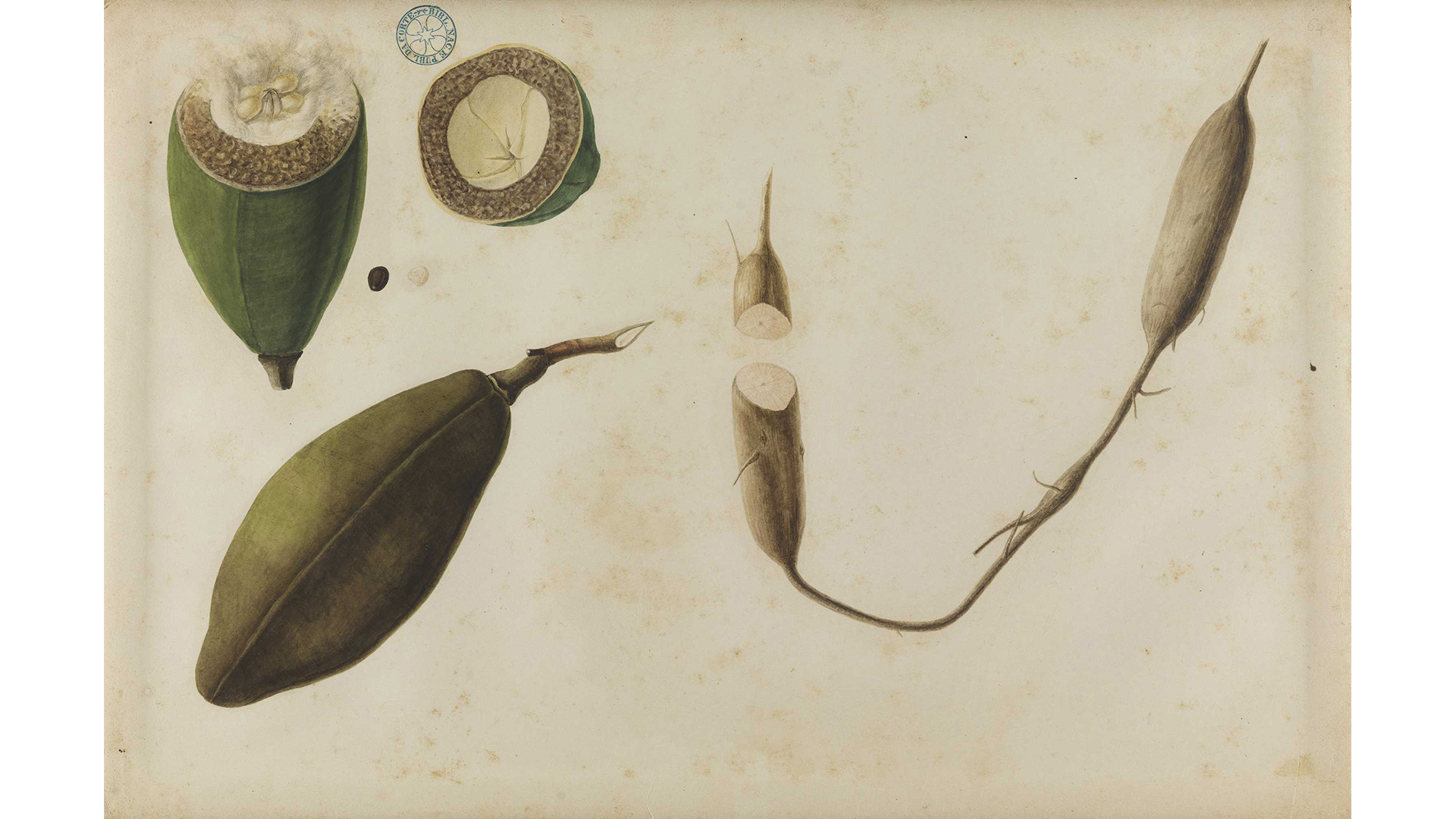 Cacau (1859-1861), de José Carlos dos Reis Carvalho